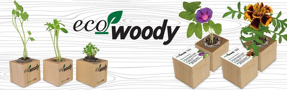 Cubo in legno con semi Eco-Woody