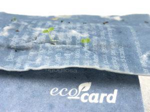 ecocard carta piantabile germogliata